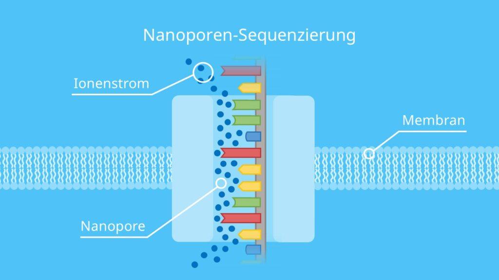 Nanoporen-Sequenzierung, DNA, Membran, DNA Sequenzierung, DNA Base, Spannung, Nanopore