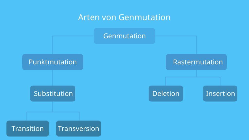 Deletion, Genmutation, Punktmutation, Rastermutation, Transition, Transversion, Insertion, Substitution
