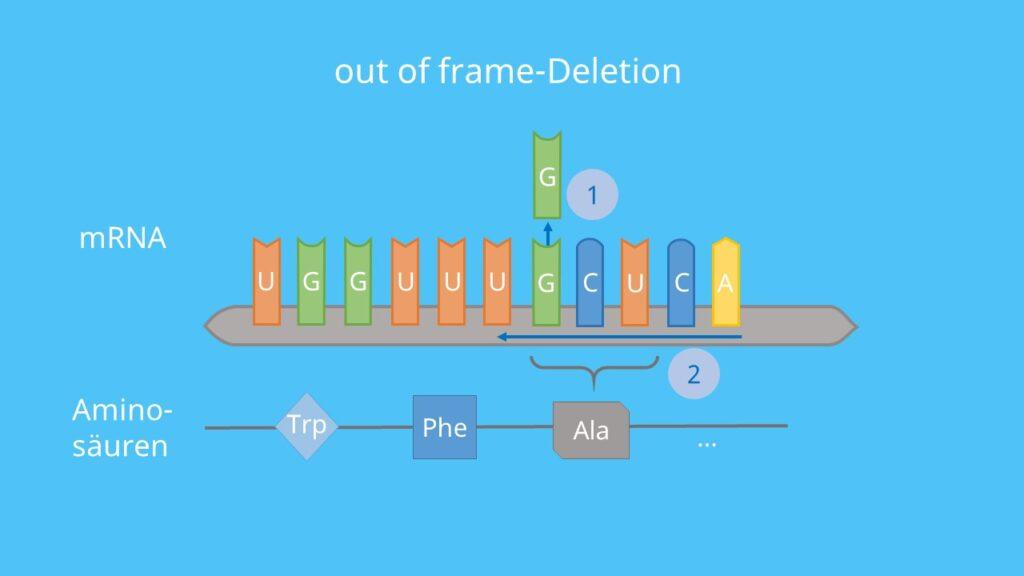 Deletion, Genmutation, Rastermutation, out of frame-Deletion, in frame-Deletion