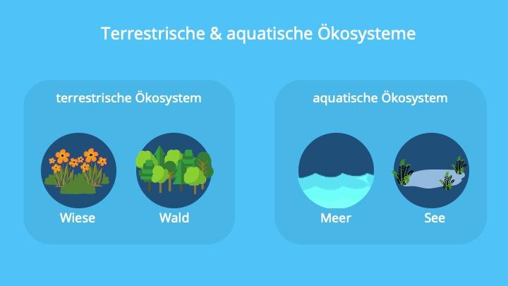 Botanik Online Okologie Analyse Von Okosystemen
