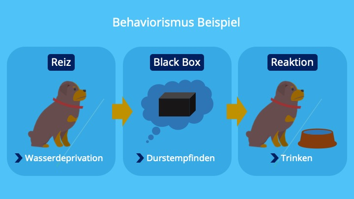 Input, Output, Stimuli, Reiz, Verhalten, Black Box, Reaktion, Reiz, Hund, Stimulus Response Modell, Reiz Reaktionsmodell