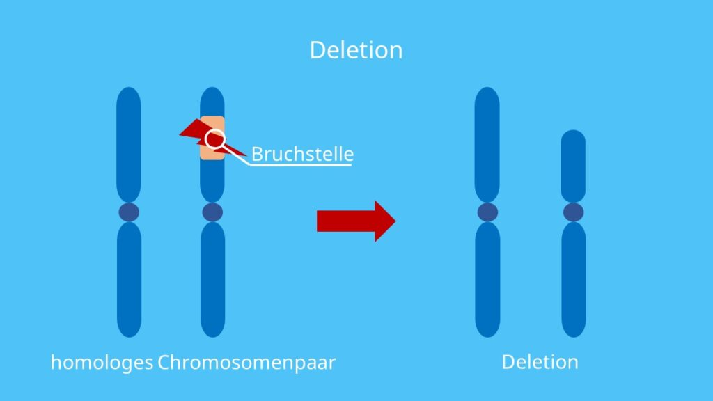 Chromosomenmutation, Chromosomenaberration, Chromosom, Deletion