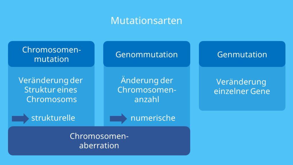 Chromosomenmutation, Genmutation, Genommutation, Chromosomenaberration, strukturelle Chromosomenaberration