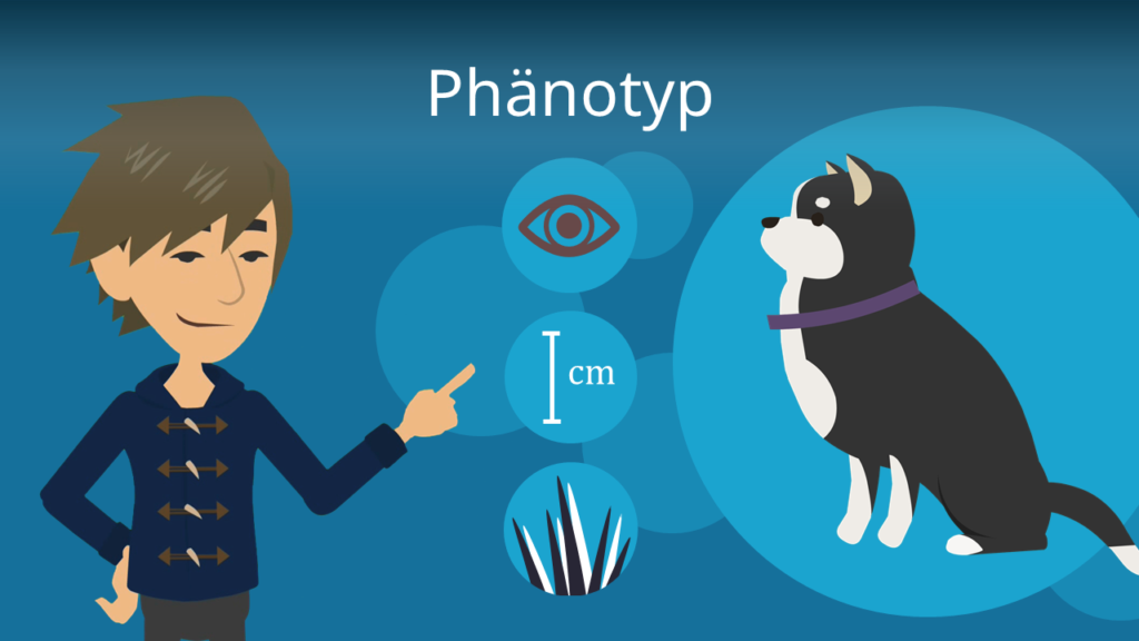 Zum Video: Phänotyp