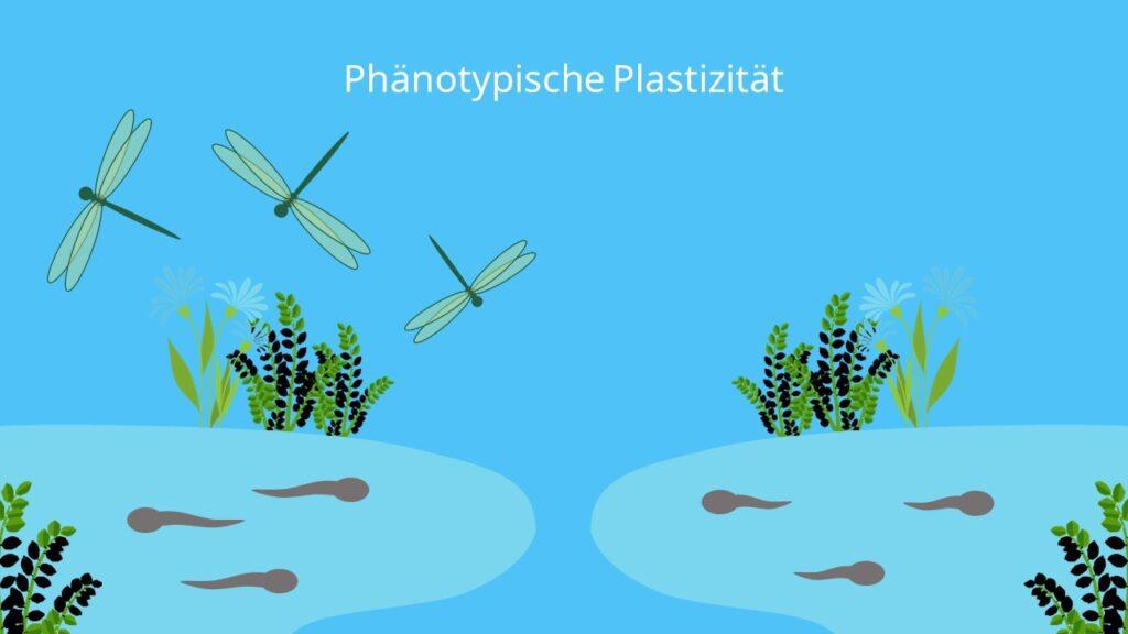 phänotypische Plastizität, Phänotyp, phänotypisch, Beispiel, Larven, Frosch