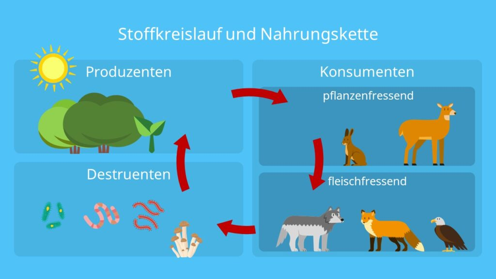 Nahrungsbeziehungen, Produzenten, Konsumenten, Destruenten, Ökosystem