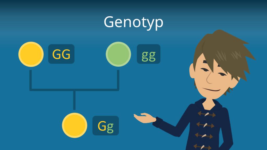 Zum Video: Genotyp