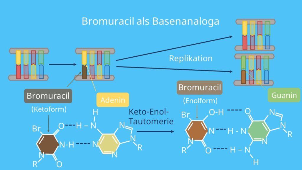 chemische Mutagene, Mutation, Genmutation, Punktmutation; Uracil, Basenanaloga, Thymin, Guanin