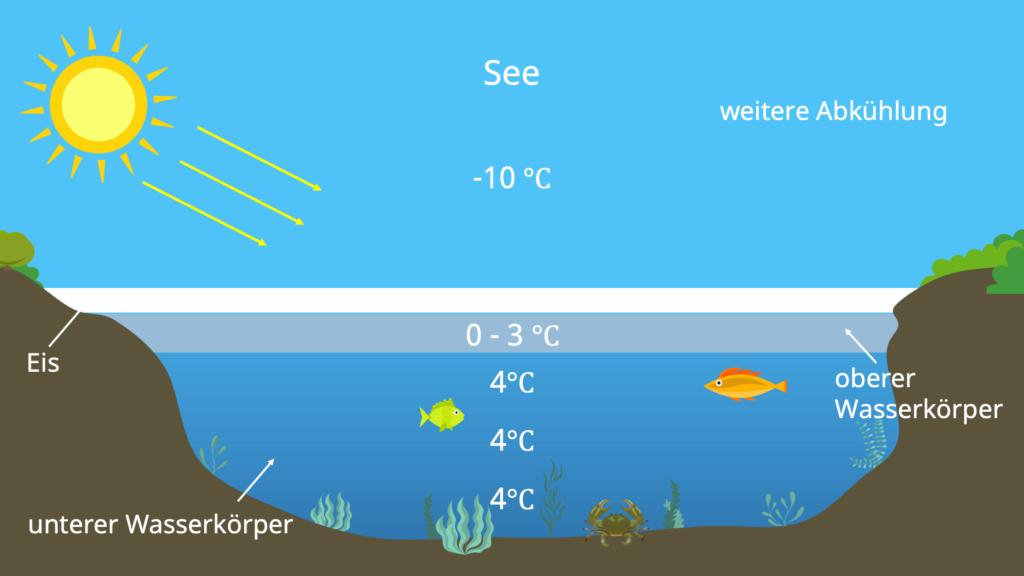 Dichte, Volumen, Anomalie des Wassers, See