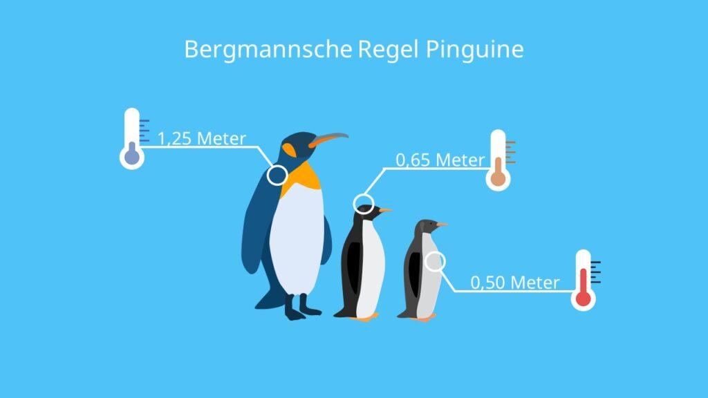 Beispiel, Klimaregel, Bergmann, Arten, Körpergröße, Körpervolumen, Klima, Pinguin Arten