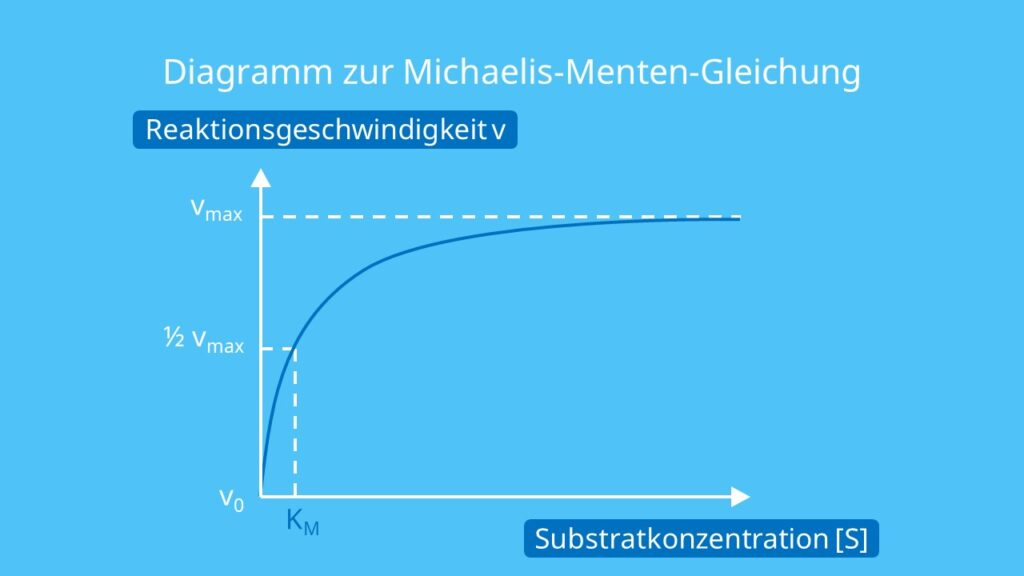 Diagramm zur Michaelis-Menten-Gleichung, Michaelis Menten Gleichung, Enzymaktivität, Michaelis Menten, Michaelis Menten Kinetik, Michaelis Menten Diagramm