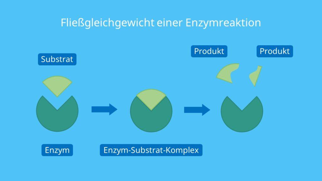 Fließgleichgewicht einer Enzymreaktion, Michaelis Menten, Substrate, Enzym, Enzymaktivität, Substratkonzentration, Michaelis Menten Kinetik
