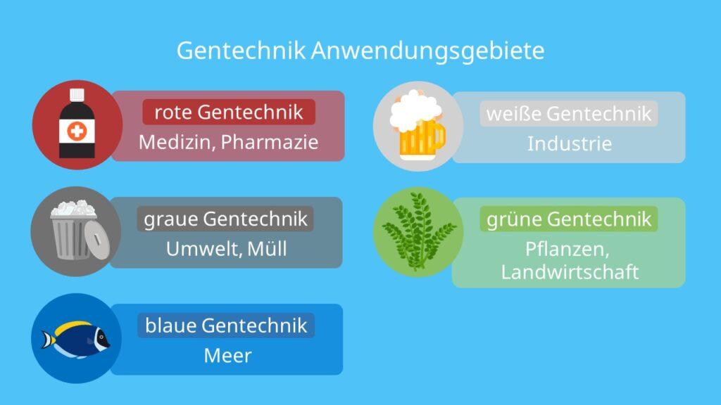 Gentechnik Anwendungsgebiete, rote Gentechnik, grüne Gentechnik, weiße Gentechnik, blaue Gentechnik, graue Gentechnik