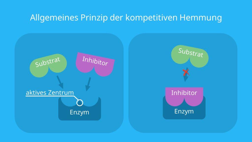 Enzyme, reversibel, kompetitiver Inhibitor, Substrat, aktives Zentrum