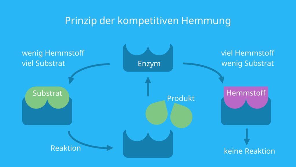 isosterisch, konkurrierende Hemmung, aktives Zentrum, Substrat, Inhibitor, reversibel, kompetitive Hemmung Enzyme