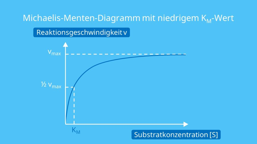 Michaelis-Menten-Diagramm mit niedrigem KM-Wert, Michaelis Menten Konstante, Michaelis Konstante, Michaelis-Menten-Gleichung, Affinität, Substrate, Substratkonzentration, KM Wert