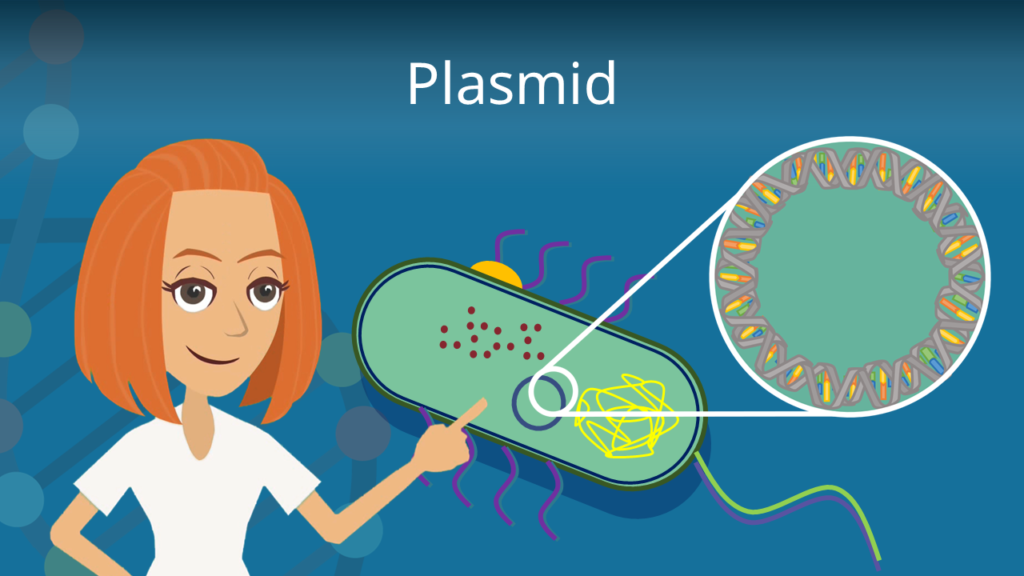 Zum Video: Plasmid