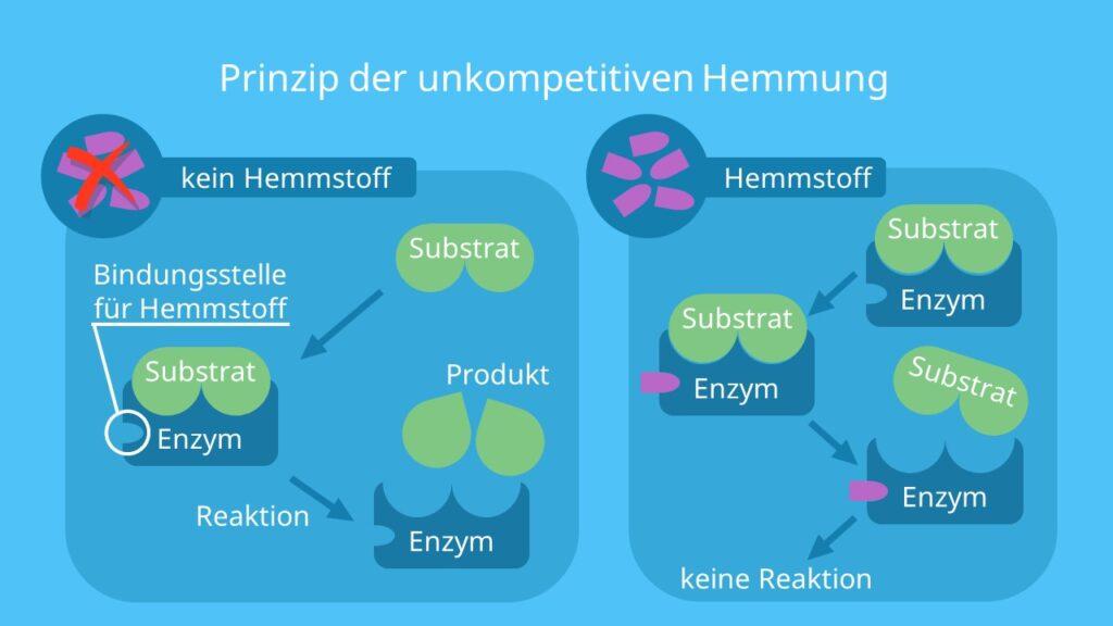 Hemmung von Enzymen, Enzymhemmung, Enzyminhibitoren, aktives Zentrum, Substrat, Enzym-Substrat-Komplex