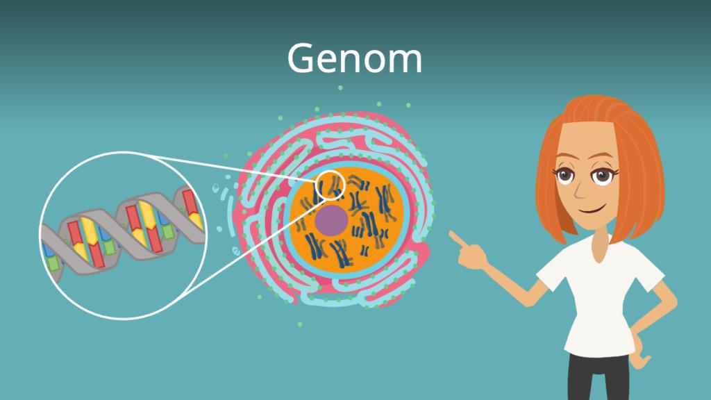 Zum Video: Genom