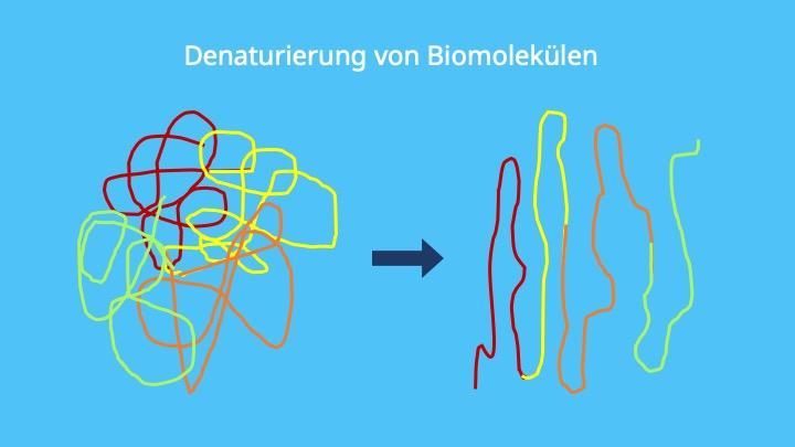 Proteindenaturierung, Denaturierung Eiweiß, Denaturierung Enzyme