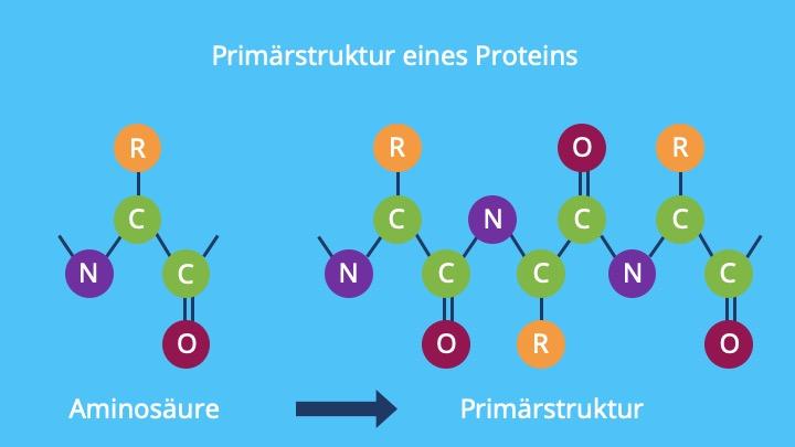 Denaturierung Proteine, Denaturierung von Enzymen, Proteine denaturieren, Denaturierung Eiweiß, Hitzedenaturierung
