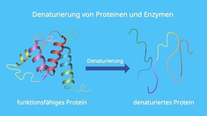 Denaturierung von Enzymen, Proteindenaturierung, Hitzedenaturierung
