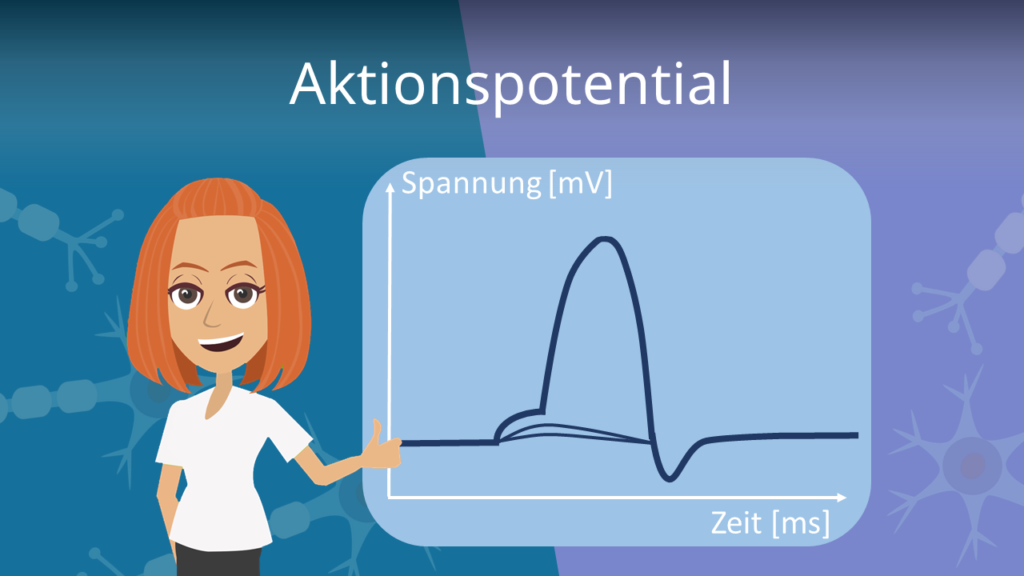 Zum Video: Aktionspotential