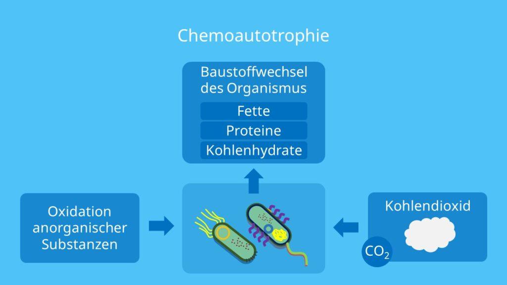 Chemoautotrophie, chemoautotroph, autotrophen, autotrophe Bakterien