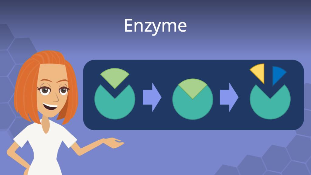 Zum Video: Enzyme