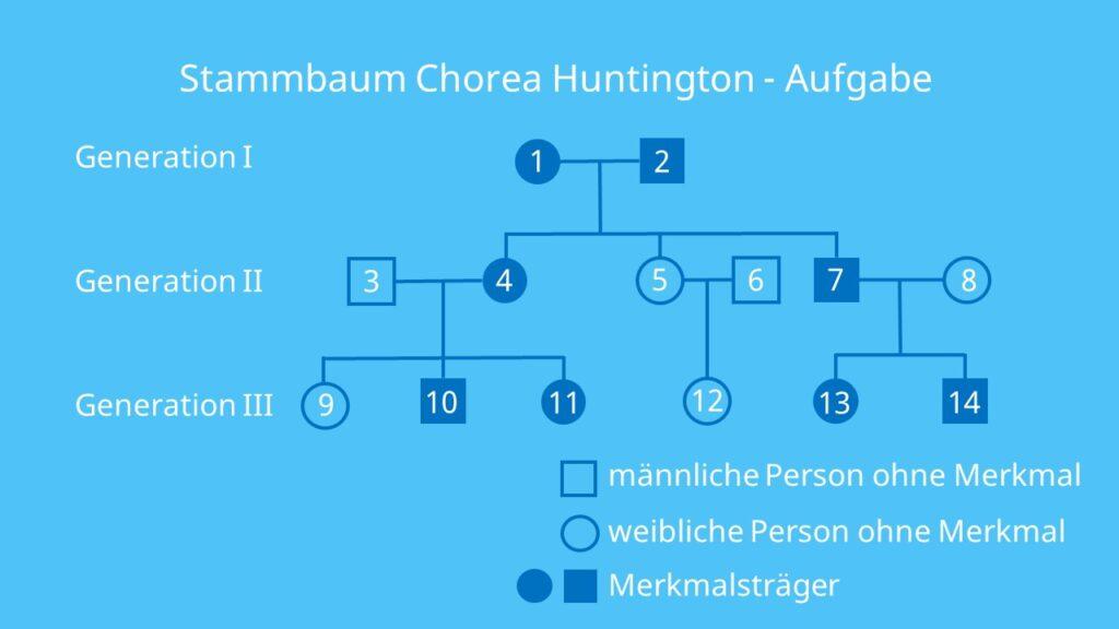 Stammbaumanalyse Tafelbild Ch Ein Tafelbild 14