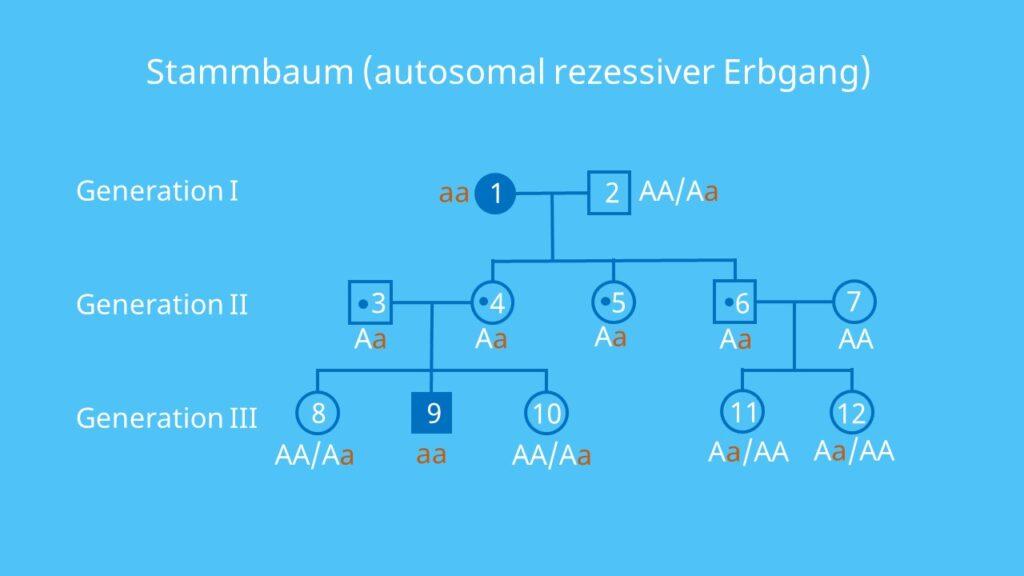 Stammbaumanalyse Theoretisches Material Biologie 4