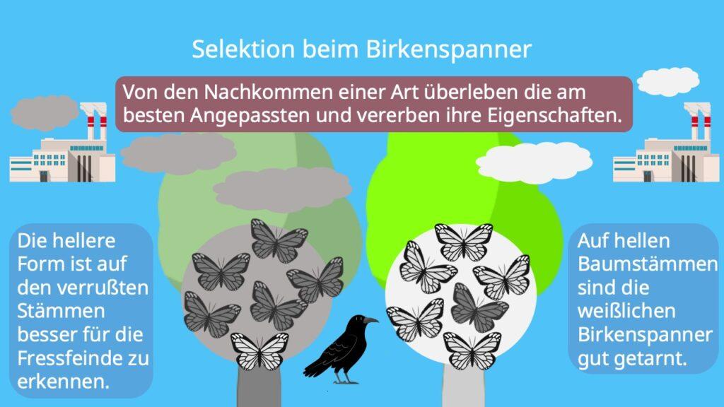Industiemelanismus, Birkenspanner, Beispiel