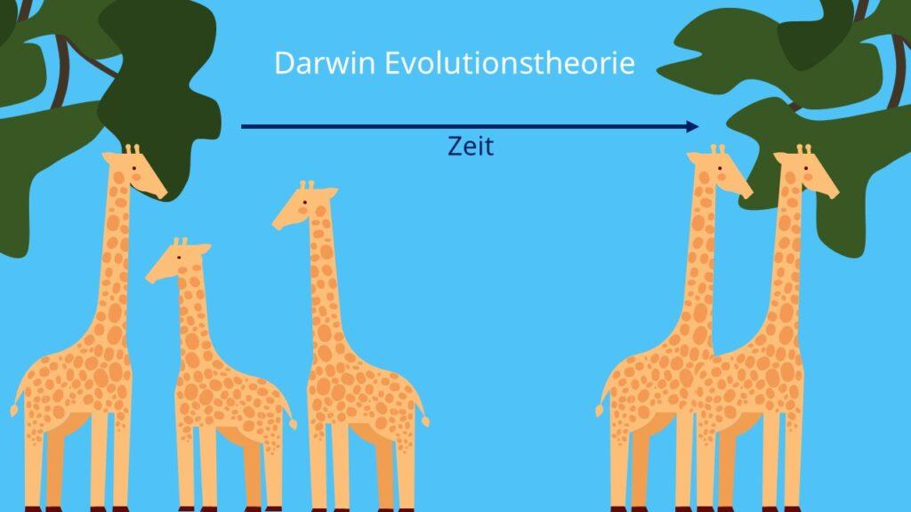Darwin Evolutionstheorie, Selektion, survival of the fittest, Selektionstherie, Charles Darwin, Beispiel