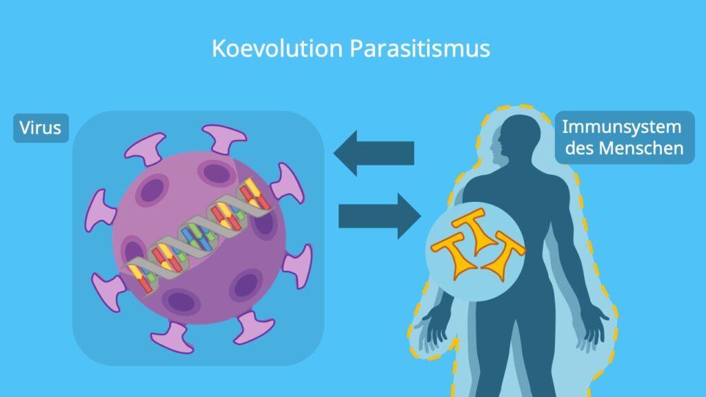 Koevolution Beispiel, Parasitismus, Mensch, Virus, Immunsystem