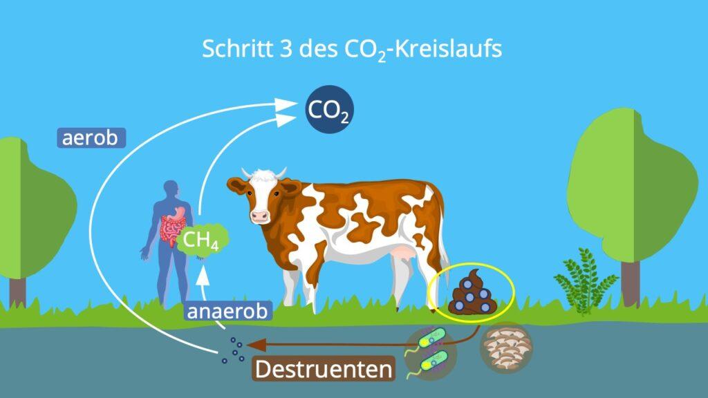 Stoffkreislauf, Kohlenstoffatom, Kohlenstoffzyklus, Kohlenstoffkreislauf, die Atmosphäre, Biosphäre, Kohlenstoffdioxidkreislauf