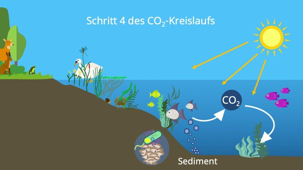 Stoffkreislauf, Kohlenstoffatom, Kohlenstoffzyklus, Kohlenstoffkreislauf, die Atmosphäre, Biosphäre, Kohlenstoffdioxidkreislauf, Hydrosphäre, Kohlenstoffkreislauf See, Kohlenstoffkreislauf Meer