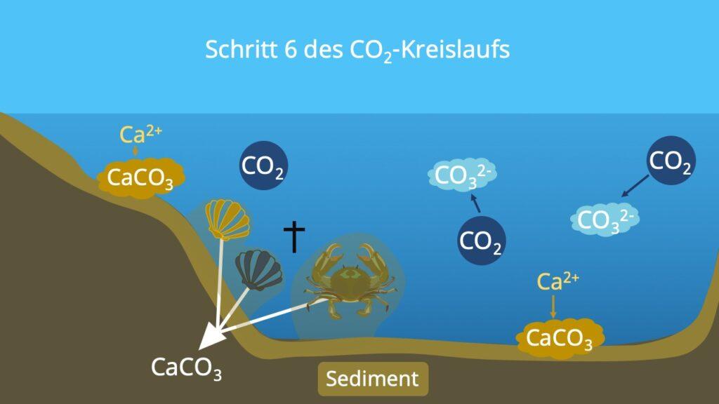 Stoffkreislauf, Kohlenstoffatom, Kohlenstoffzyklus, Kohlenstoffkreislauf, die Atmosphäre, Biosphäre, Kohlenstoffdioxidkreislauf, Lithosphäre, Kohlenstoffkreislauf Meer