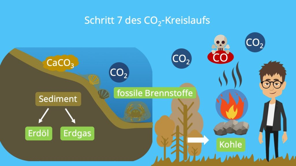 Stoffkreislauf, Kohlenstoffatom, Kohlenstoffzyklus, Kohlenstoffkreislauf, die Atmosphäre, Biosphäre, Kohlenstoffdioxidkreislauf, Lithosphäre, Kohlenstoffkreislauf Wald