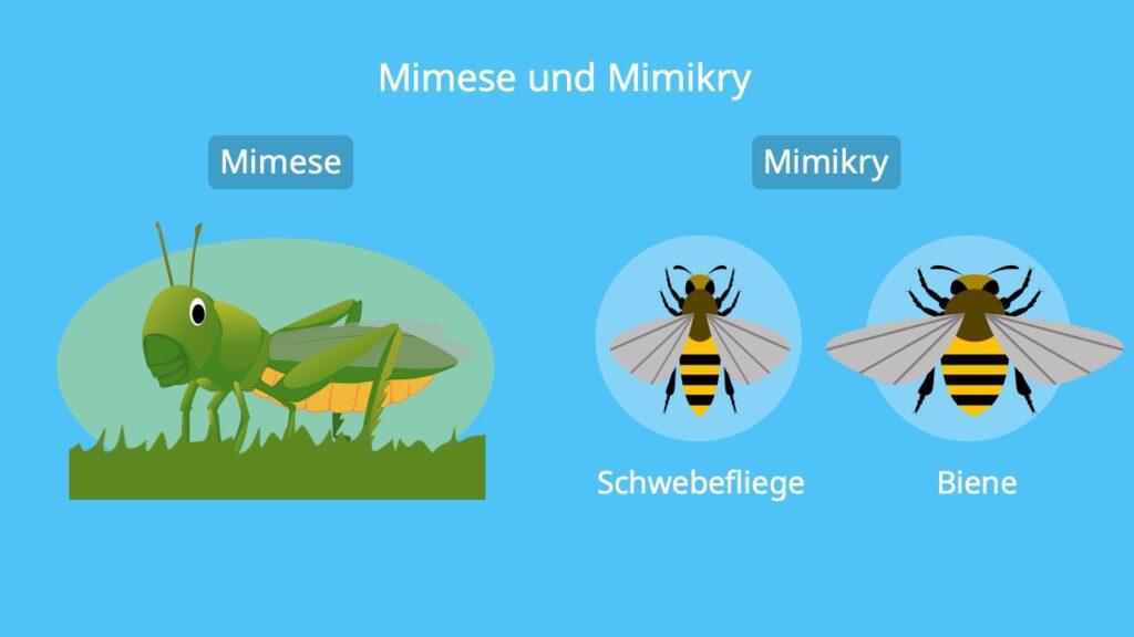 Tiere, Pflanzen, Fressfeinde, Lebensraum, Beispiel, Beispiele, Biene, Schwebefliege, Heuschrecke
