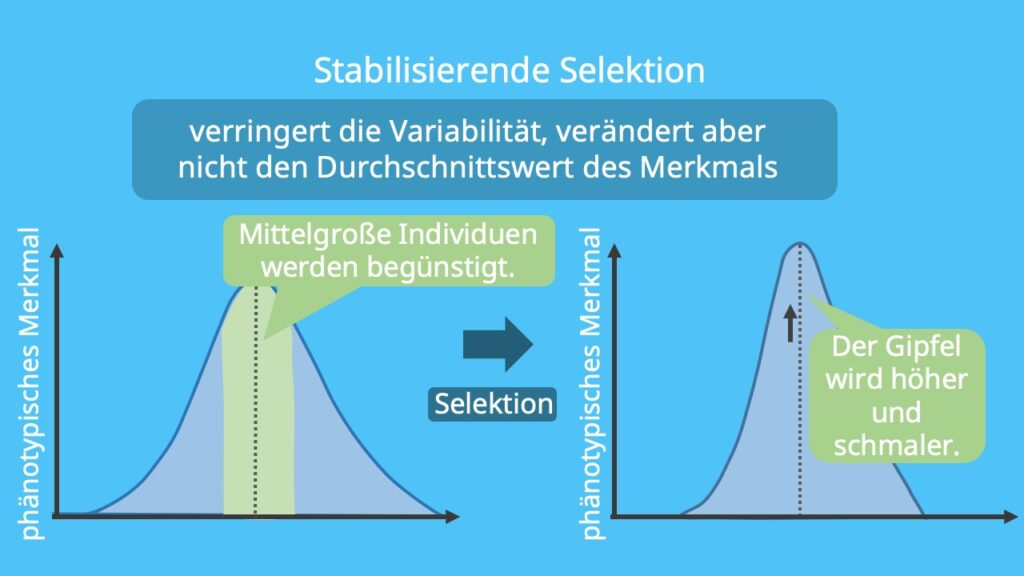Natürliche Selektion , sexuelle Selektion, künstliche Selektion; gerichtete Selektion, disruptive Selektion, Selektionsdruck, transformierende Selektion