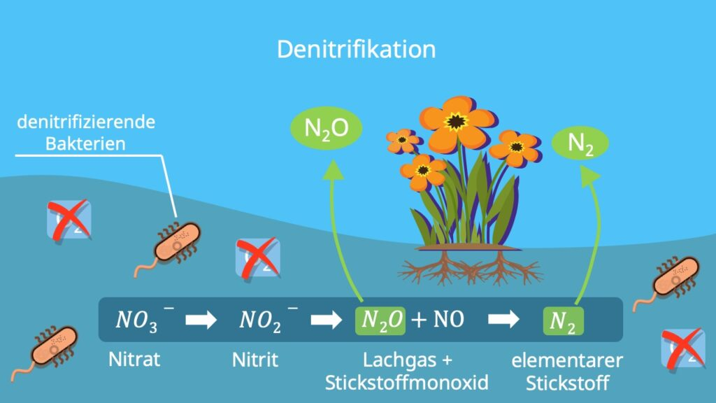 Stickstoffkreislauf, N Kreislauf, Nitratkreislauf, Nitrat Stickstoff, Stickstofffixierung Pflanzen, Nitrifikation Denitrifikation