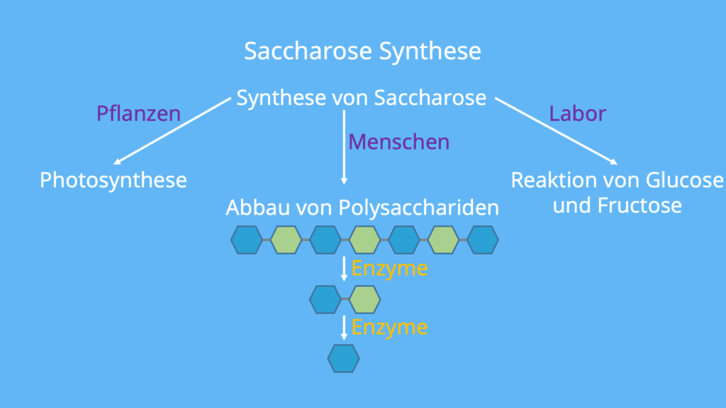 Sacrose, Glucose, Fructose, Zucker, Zucker Molekül