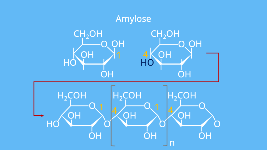 Stärke Molekül, Stärke Chemie, Aufbau von Stärke, Stärke Formel, Stärke Aufbau