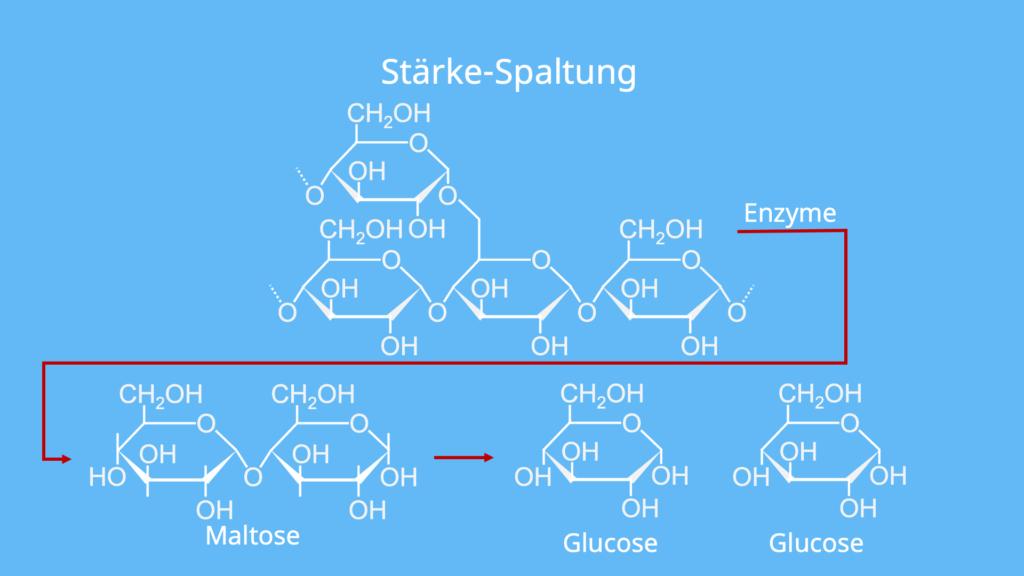 Stärkeabbau, Stärke Chemie, Stärke Strukturformel, Was ist Stärke