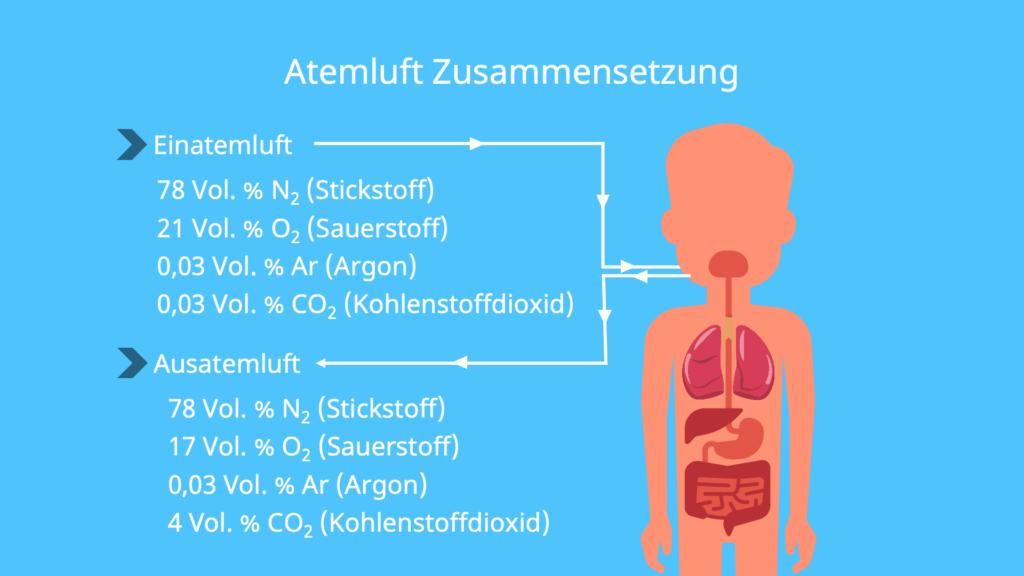 Zusammensetzung Atemluft + ausatmen, Zusammensetzung Atemluft, Luft besteht aus, Aus welchen Gasen besteht Luft, Wieviel Sauerstoff ist in der Luft, O2 Gehalt in der Luft, Luftgemisch, Luftbestandteile. Sauerstoffanteil Luft, Stickstoff in der Luft