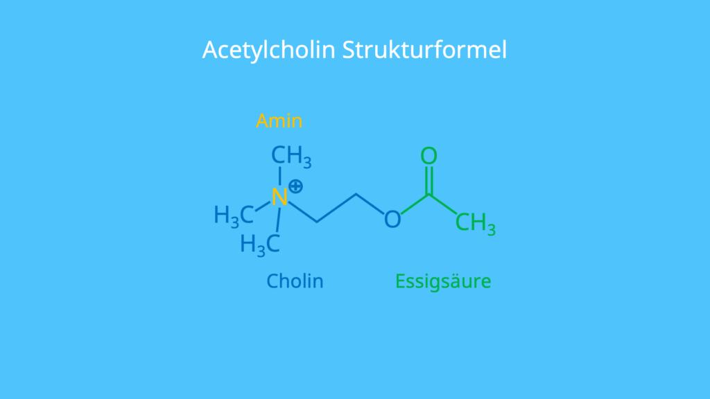 Cholin, Amin, Essigsäure, Strukturformel