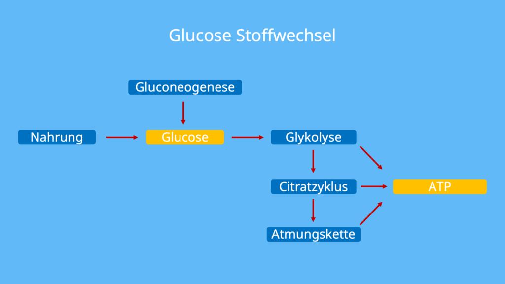 Zucker Chemie, Glucose Aufbau, D Glucose, L Glucose