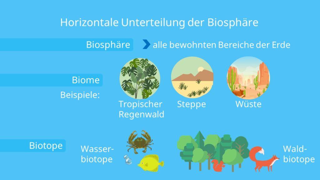 Biosphäre, Biom, Ökozone, Ökoregion, Ökotop, Ökosystem, Biologie, Ökologie