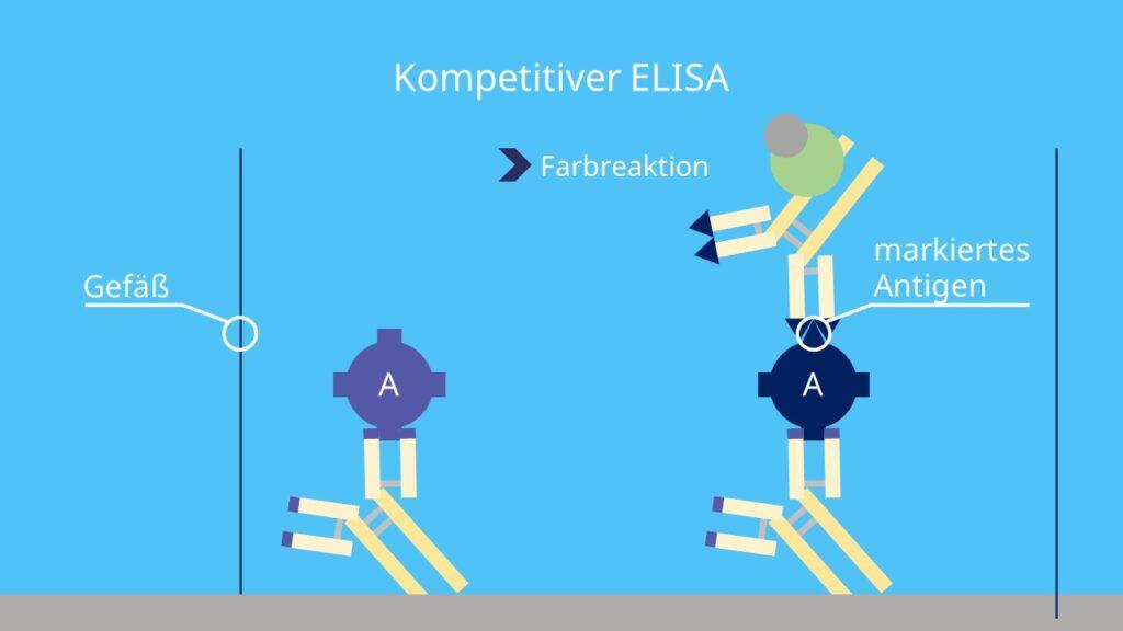 competitive ELISA, elisa assay
