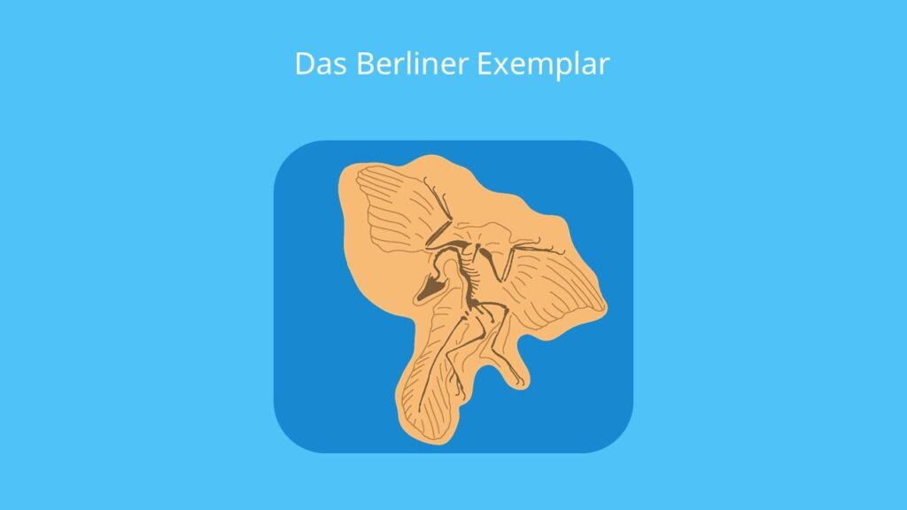 Archaeopteryx lithographica, fossil, skelett, fund, berliner exemplar, brückentier, größe bilder, urvogel, bilder